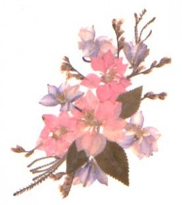 A spray of pressed flowers