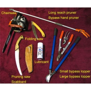 Pruning tools for roses